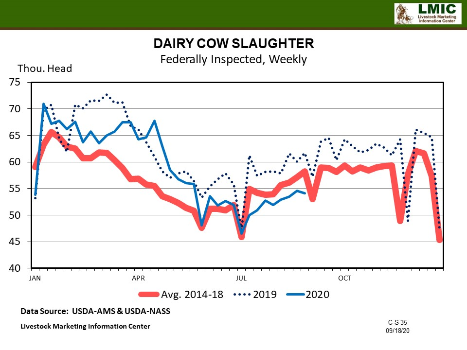Graphic -- Dairy Cow Slaughter